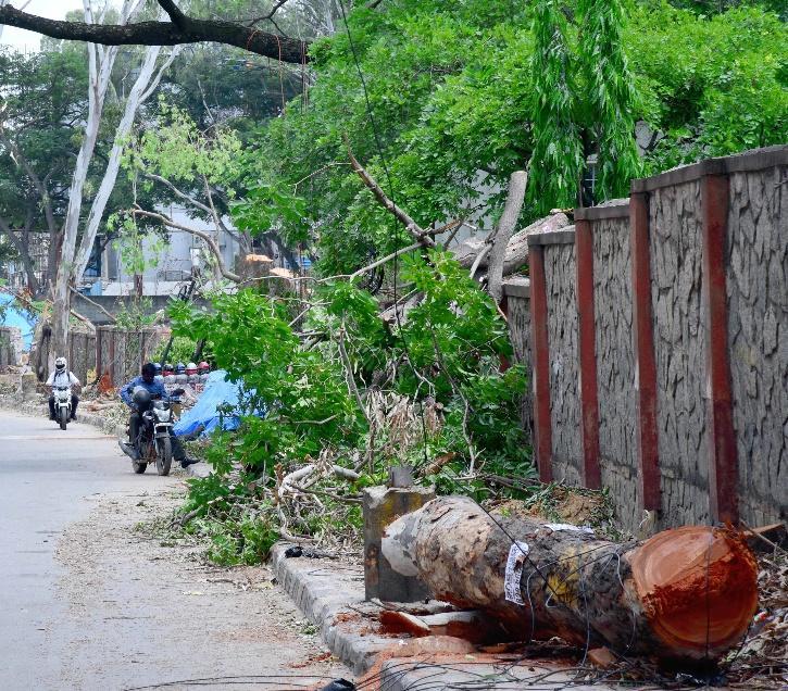 KRDCL, KRDCL Tree Cutting, Bengaluru Trees, Bengaluru Tree Cutting,  Anekal, Nelamangala, Harohalli, KR Puram, Bengaluru Environment,  Environmental Impact Assessment