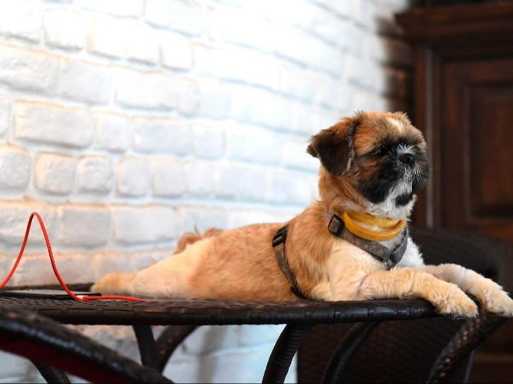 All About Indian Dog Breeds Prime Minister Talked About