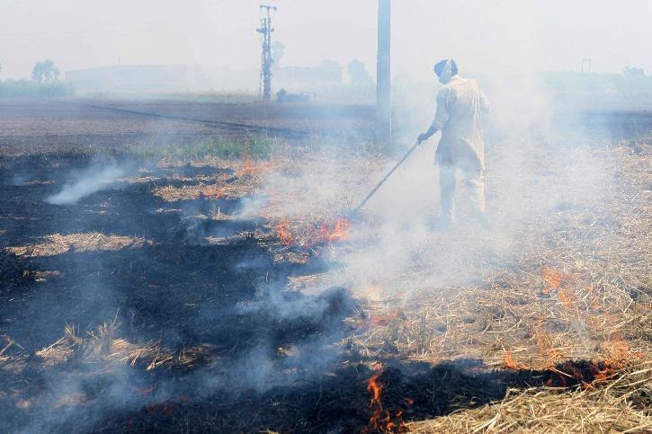 Stubble Burning, Stubble Burning Punjab, Stubble Burning Haryana, Stubble Burning Delhi, Delhi Air Quality, Delhi Air Pollution, Air Pollution COVID-19