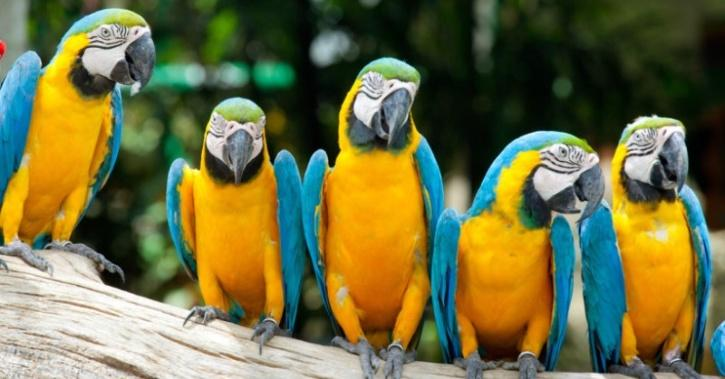 Parrots sitting together
