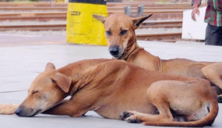 Kerala Dog, Kottayam Dog, Dog Dies Of Electrocution