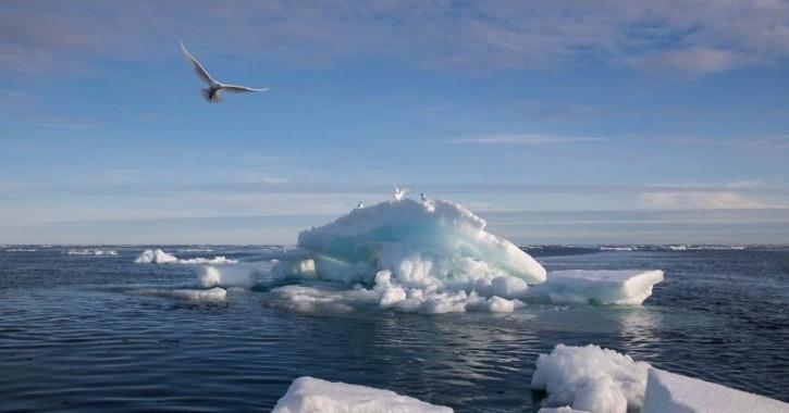 less ice means less solar radiation is reflected and more is absorbed by the ocean