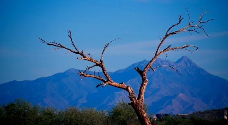 dead trees carbon emission