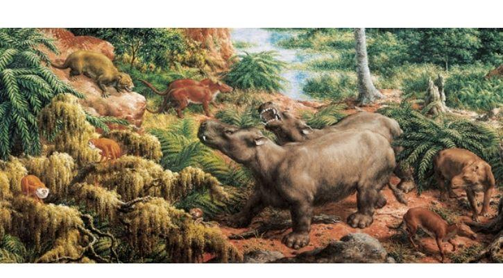 eocene epoch