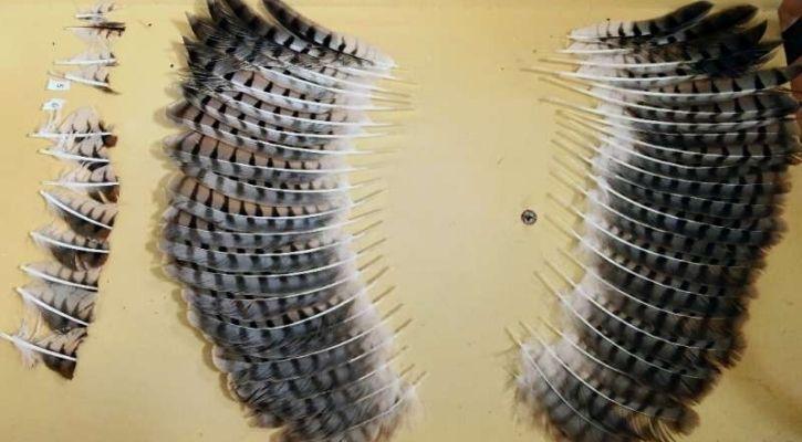 hawk wings cut salvador