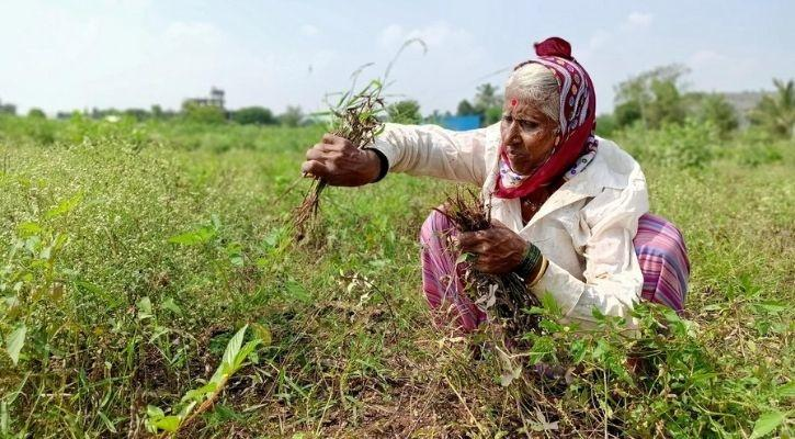 M Swaminathan green revolution