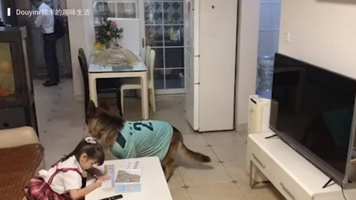Dog helps girl watch TV