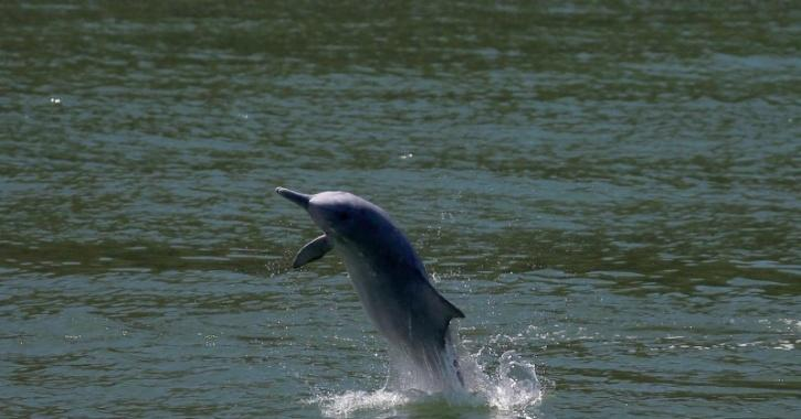 Dolphin numbers in the area had jumped by up to 30% since March