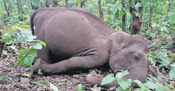 elephant killed