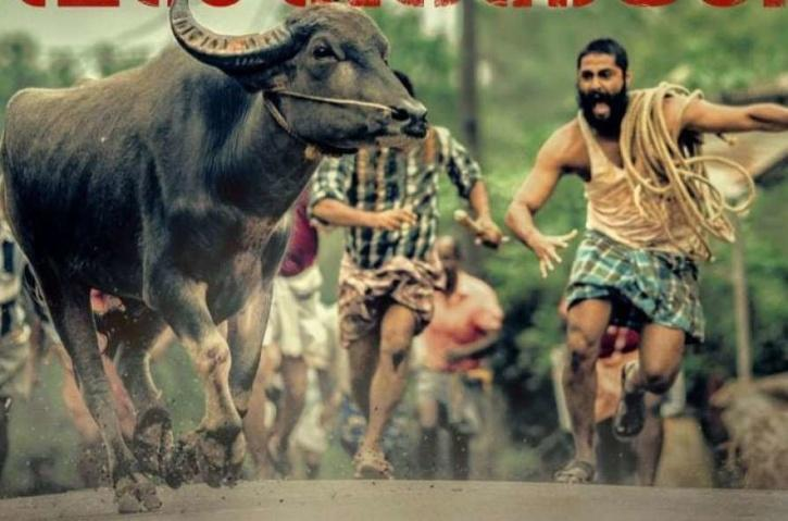 Jallikattu to compete against Parasite at Asian Film Awards.