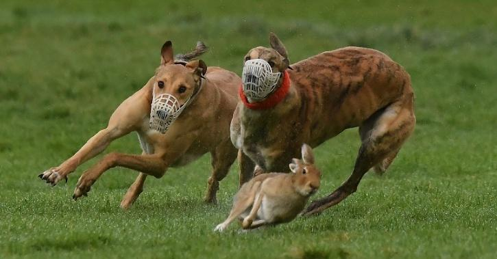Anti Predatory Behaviour
