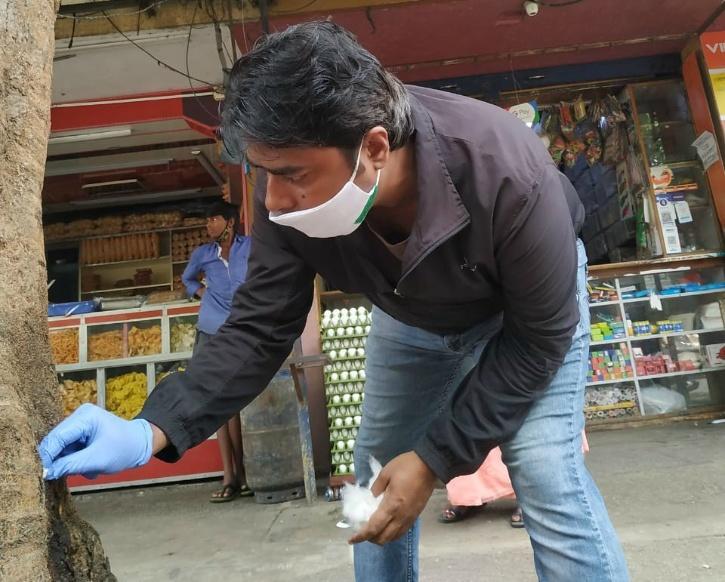 Bengaluru Trees, Bengaluru Tree Cutting, Bengaluru Tree Poisoning, Acid On Trees, Bengaluru Tree Doctor, Vijay Nishanth