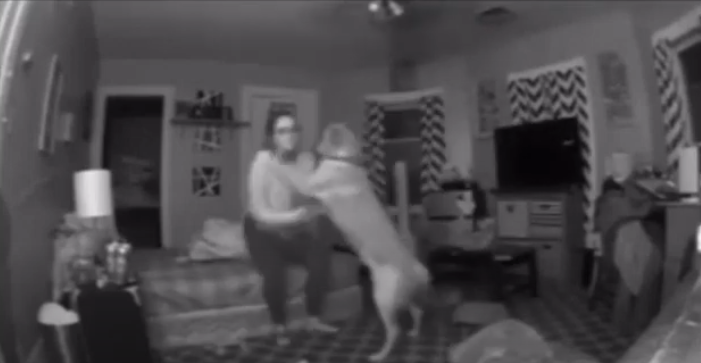 dog takes care of owner