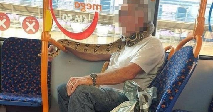 Man told snakeskin isn't a legitimate face covering