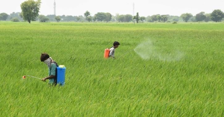 India agriculture pesticide use