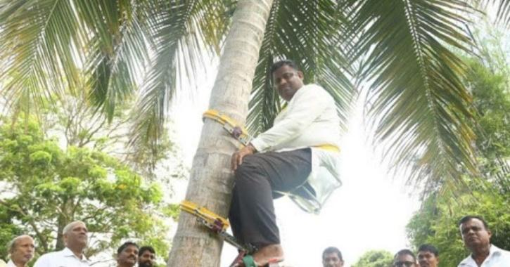 minister climbs tree