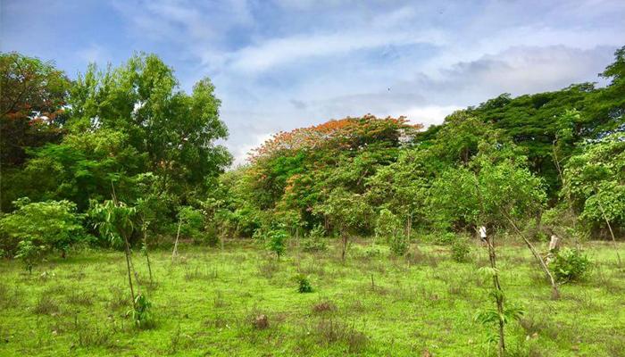 Aarey Forests (Representative image)