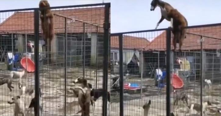 Puppy climbs fence