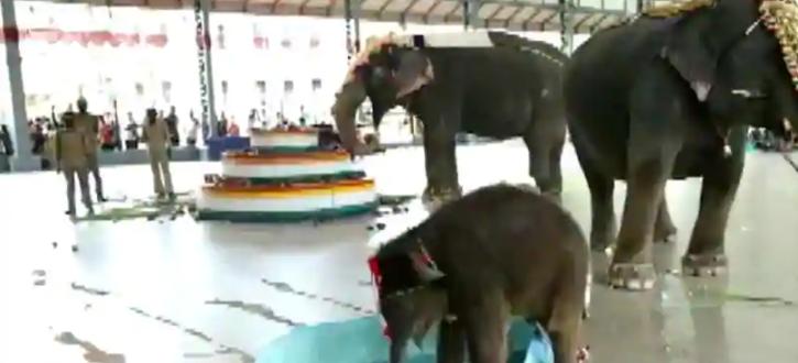 Baby elephant Shivani