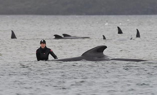 Man helping whale