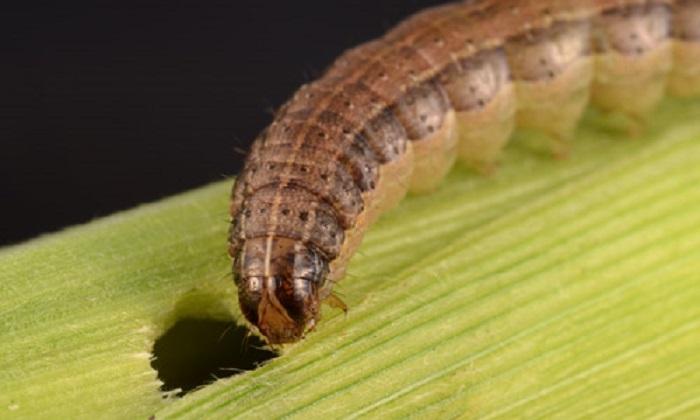 Entomology & Nematology
