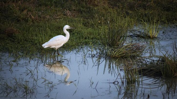 An egret by the lake