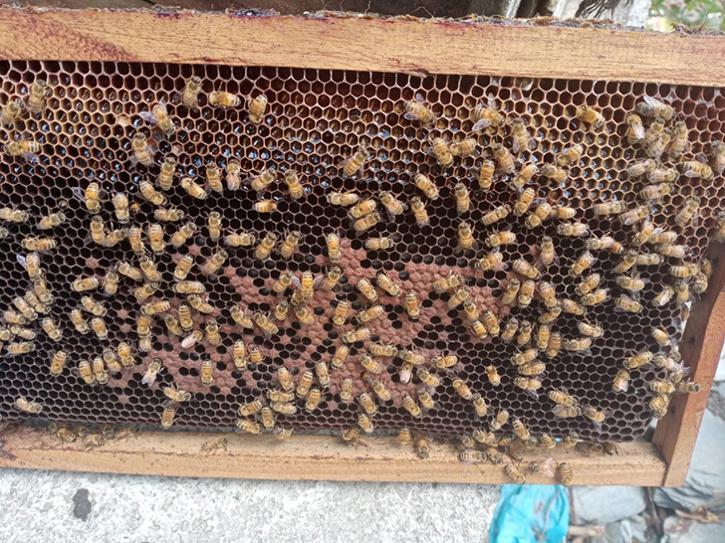Rahila Kousar uri honey
