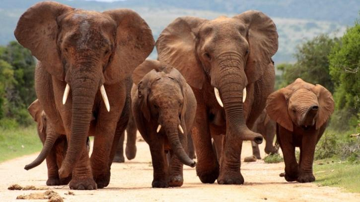 A suspected poacher was killed by a herd of elephants while fleeing from park rangers in South Africa.