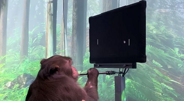 neuralink monkey game