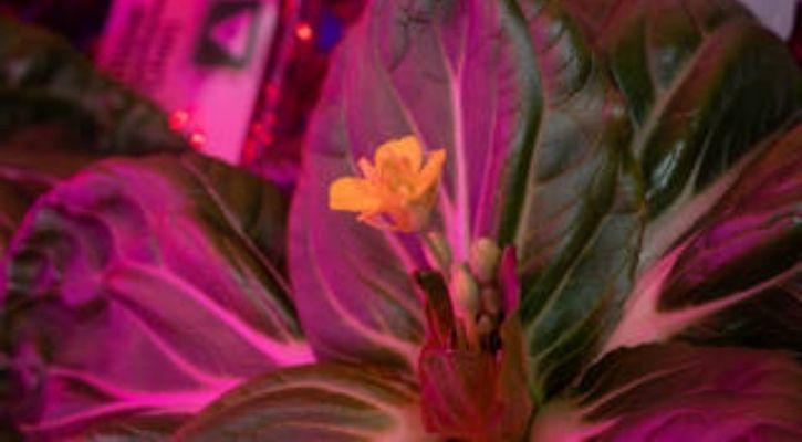 nasa plants iss