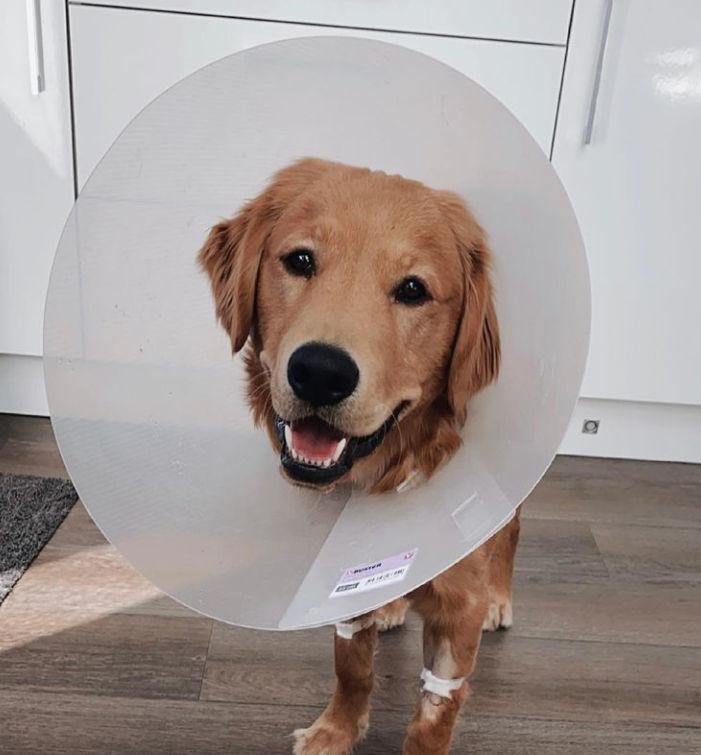 The AirPods had the charging light on which means it was working even while being inside the dog's stomach for hours.