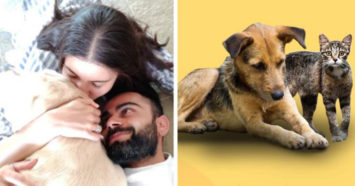 Inspired By Wife Anushka, Virat Kohli To Fund Shelters And Ambulances For Animals In Mumbai