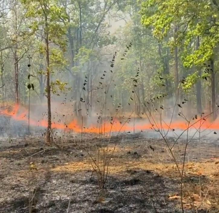 bandhavgarh fire
