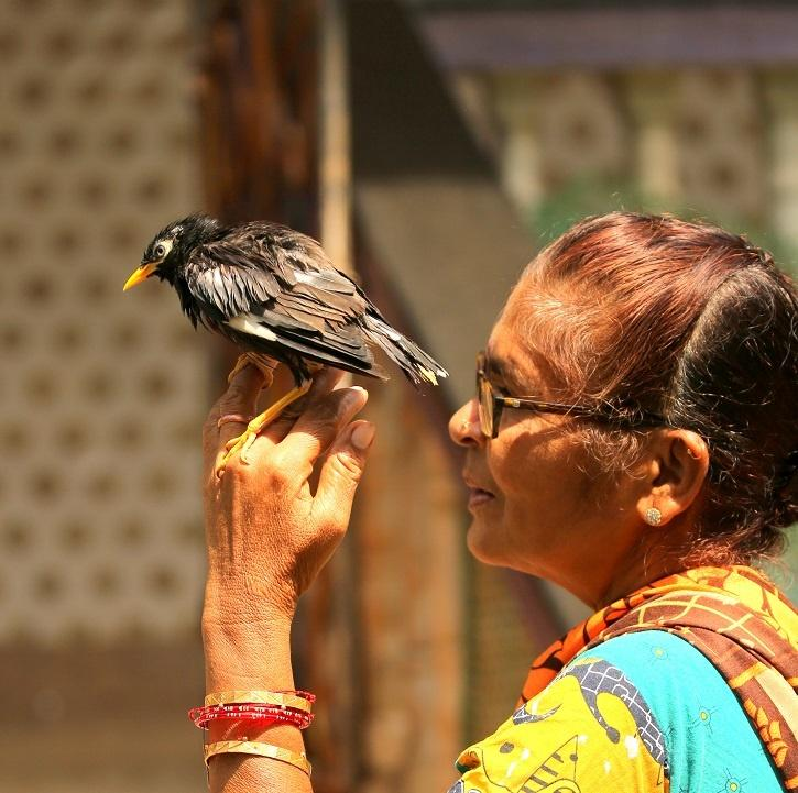 This woman from Goa is ensuring that birds get a safe space to live in.