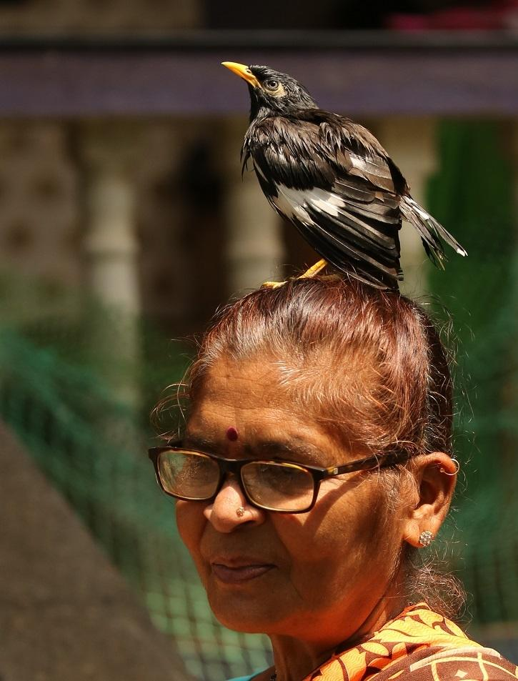 Popular in her village in Goa,  the woman is known to protect the birds of the region.
