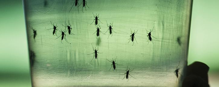 Malaria gene editing