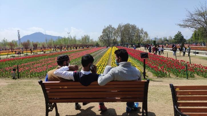 kashmir-tulip-garden