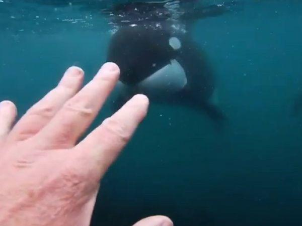 Morris said he was swimming with 12 of his friends when he first encountered the whales. But he was all by himself when the encounter with the two whales happened.