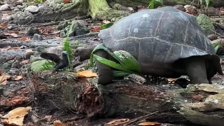 Tortoise hunting and killing bird
