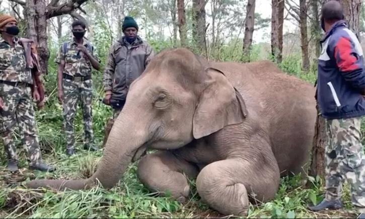 Chinnakanal Elephant