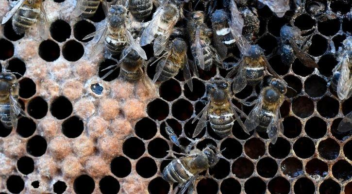 Bees are dying. With them, humans would die too