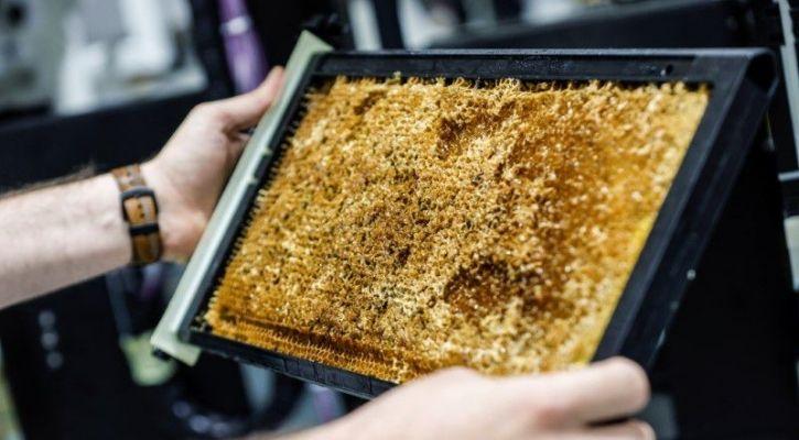 Israeli start-up creates robotic beehives
