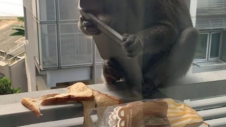 Monkey eats tablet