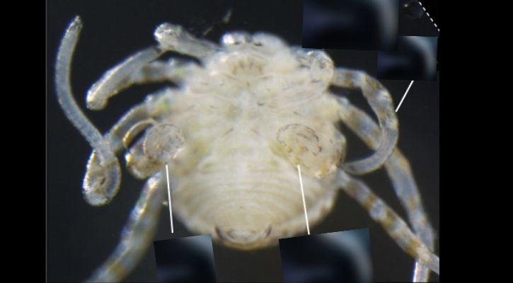 Scientists Mutate Critter To Create Ghastly Spider-Like Creature With Short Legs