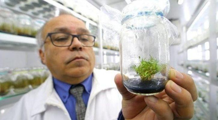 plant based vaccine