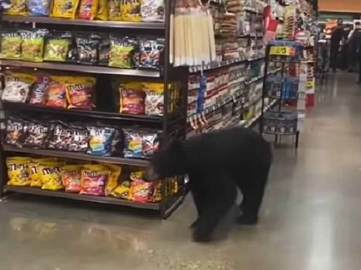bear in supermarket