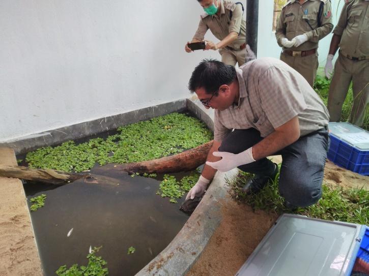 Turtle Rehabilitation