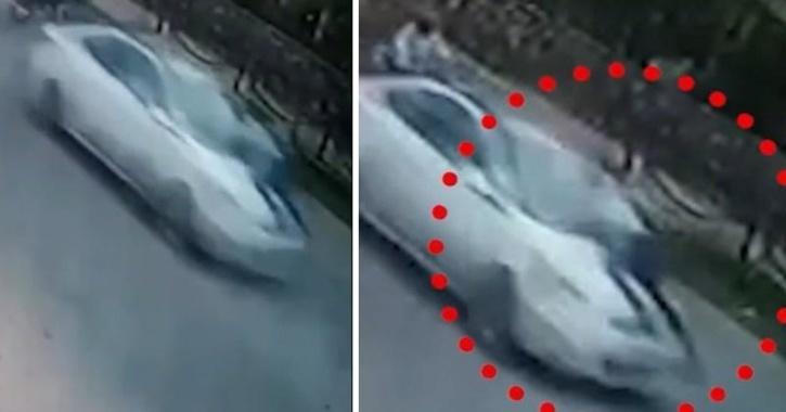 car clings on car bonnet