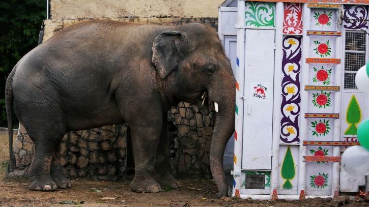 Kaavan lonely elephant