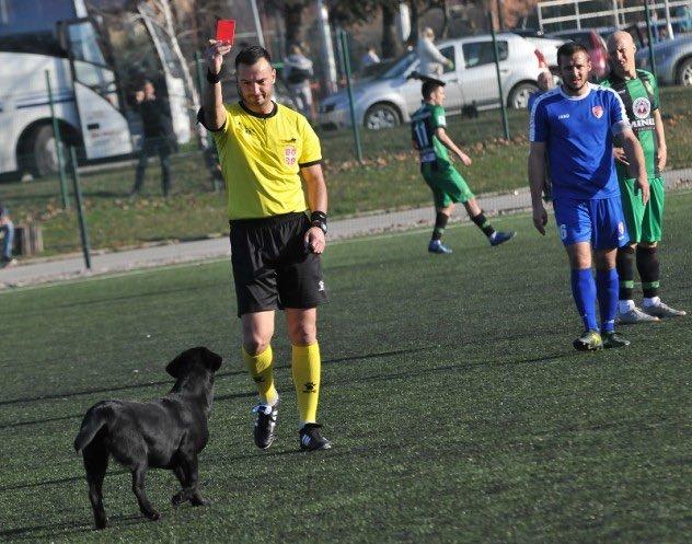 Soccer-Dog